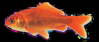 """""""Voel je als een vis in het water"""""""