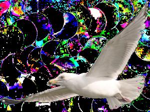 """""""Voel je vrij als een vogel in de lucht"""""""